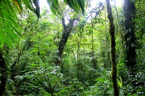 Cloud Forests and Sloths in Monteverde Costa Rica
