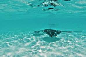 Thoughts on Stingray City, Cayman Islands