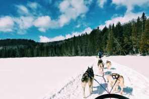 Dog Sledding in Ontario, Canada