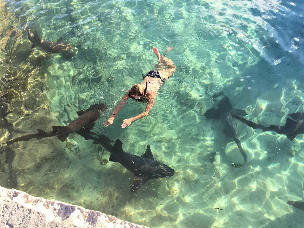 Swimmng-with-sharks-the-Bahamas